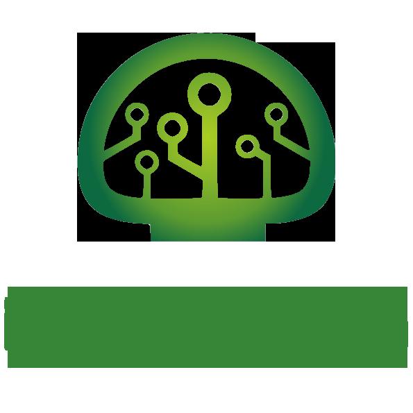Buy Psilocybin cheap